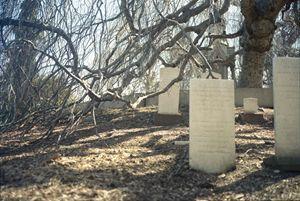 Tangled Graves