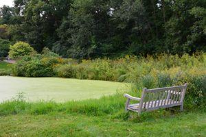 Bench by Green Pond