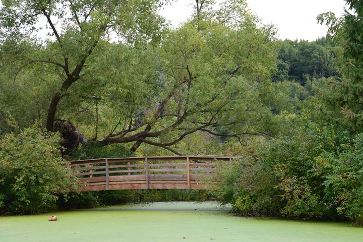 Close up of Bridge over Green Pond - Michelle Stern Photography