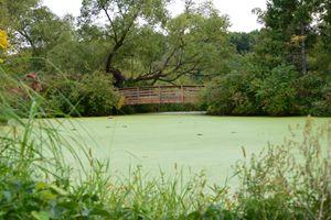 Bridge over Green Pond