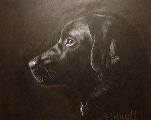 Iconic Black Labrador