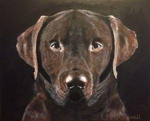 Iconic Chocolate Labrador