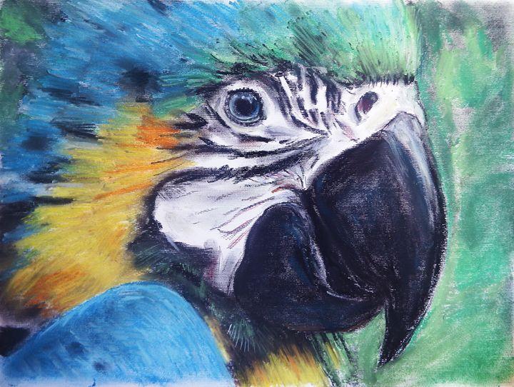 Parrot - Mark Dallimore