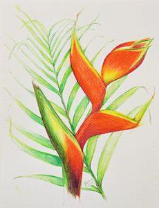 Parrot's Bill Flower 1