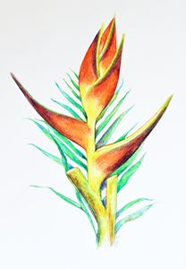 Parrot's Bill Heliconia
