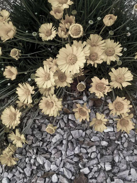 Daisies - Perpetiel Art