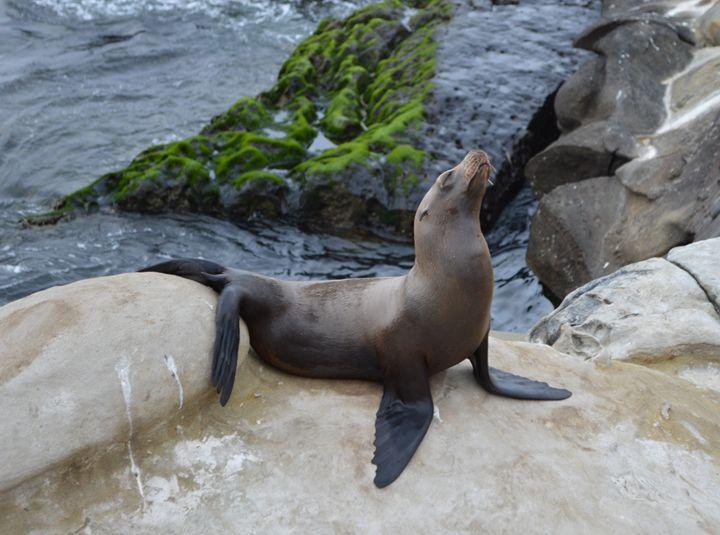 Posing Baby Seal - jammer66