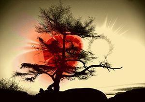 Tree Blossom 2 - Elaine Hunter