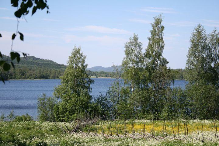 Lake and Fence - Art KalleCat