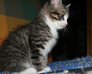 Kitty the Kitten
