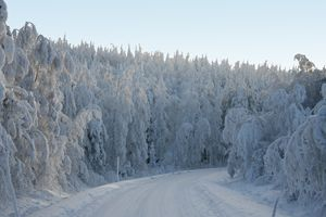 Snow Forest - Snow Road