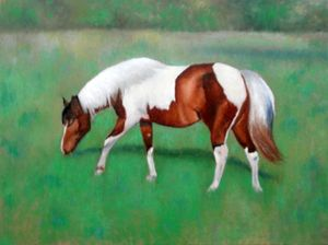 Painted Horse in Pasture