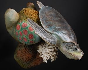 Kemp's Ridley Sea Turtle Reproductio