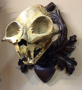 One of a Kind Demon Skull Real Bone