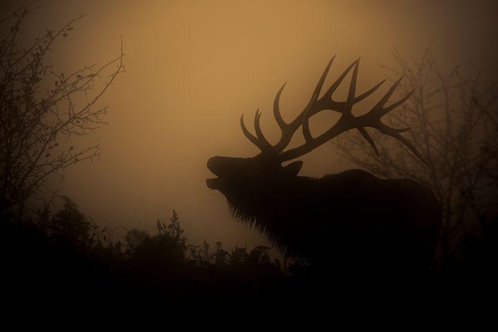Sunrise Bugler - Jeb McConnell
