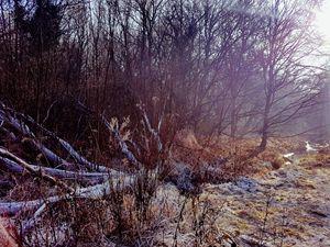 Winter Woods Wonderland