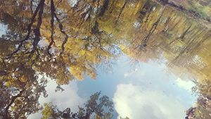 Reflection of Autumn Trees