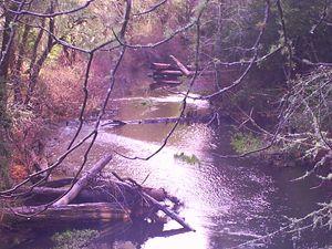 Creekside Shimmer