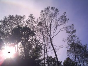 Sunset Halo Sillouette