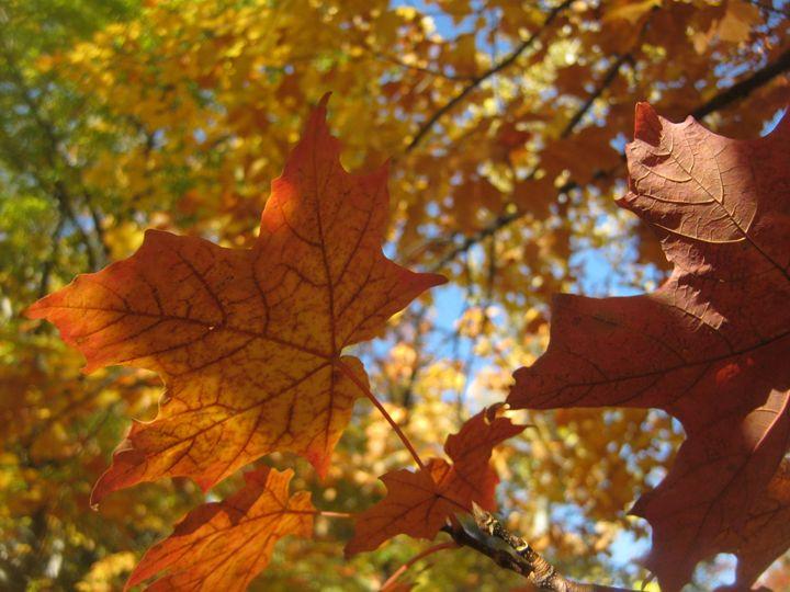 Autumn Leaves - Madison Czer