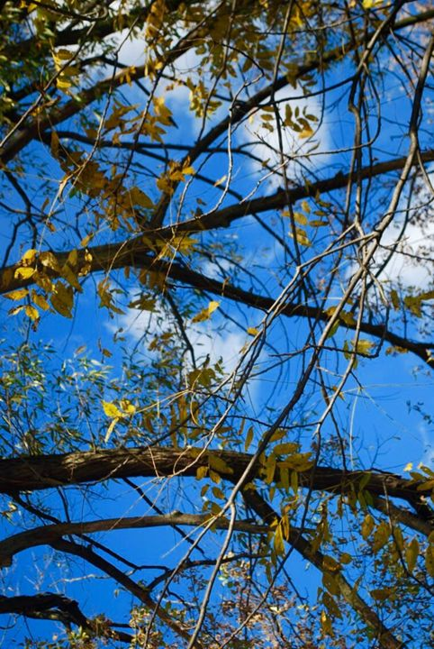 Blue Sky and Branches - Madison Czer