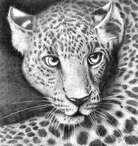 Safari Sunday