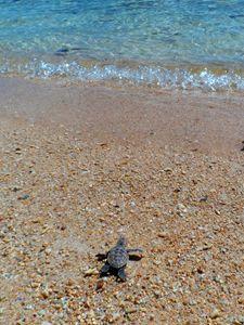 Go turtle go!