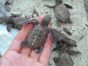 Freeing trapped sea turtles