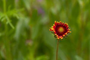 Red and Orange Flower