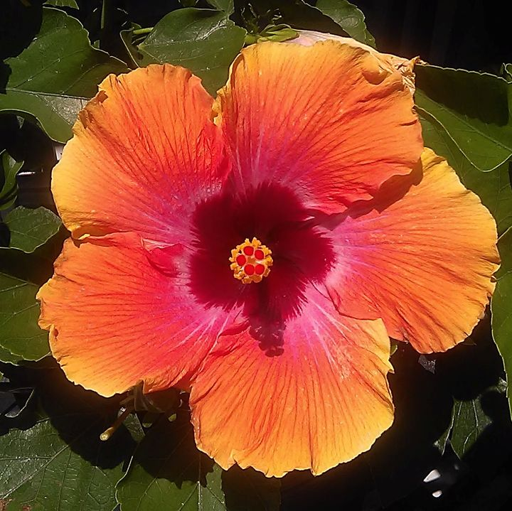 Flower 1 - Shy'Tessa J