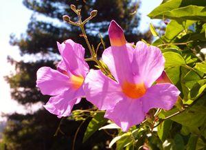 Purple Flowers at Wayfarers Chapel