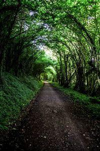 arbre tunnel