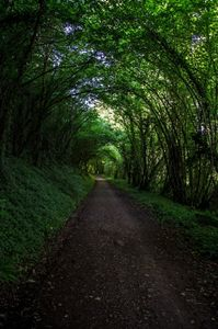 tunnel arbre