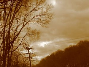Electric Trees