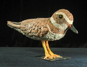Semipalmeted Plover