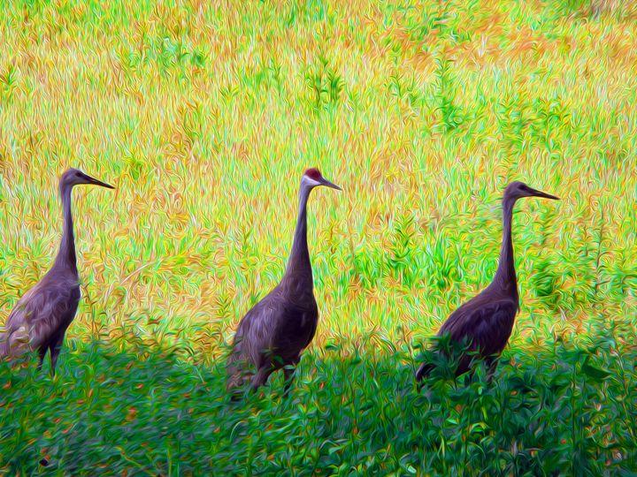 Sandhill Cranes Standing - OpposableThumbnails