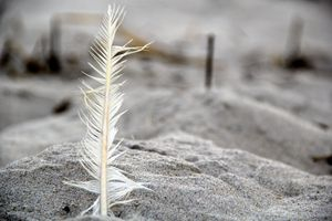 Beach Feathers