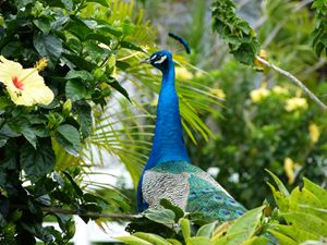 Nice Visitor to Yard- Maui HI