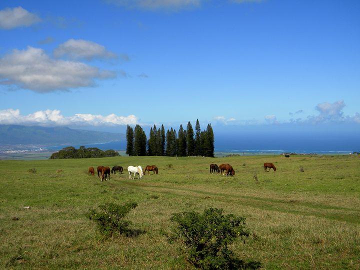 Peaceful Moment Haleakala Ranch - LuckyPhotos