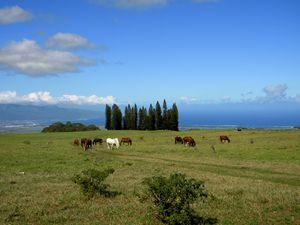 Peaceful Moment Haleakala Ranch