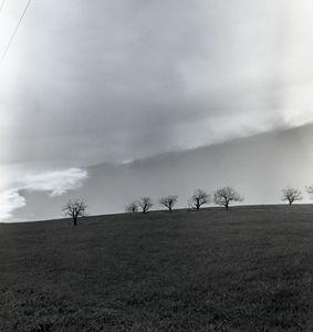 Pastoral Horizon