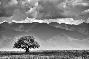 Lone tree and Sangre de Cristos