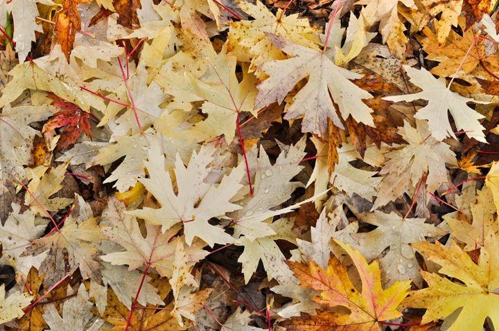 Autumn tones - Peter Briggs Digital Images