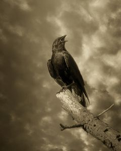 The Storm Crow - Rybird