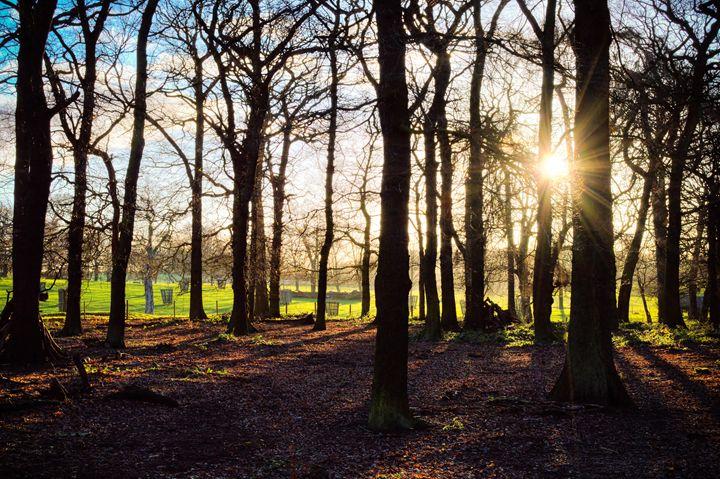 Trees and sunlight - najih7