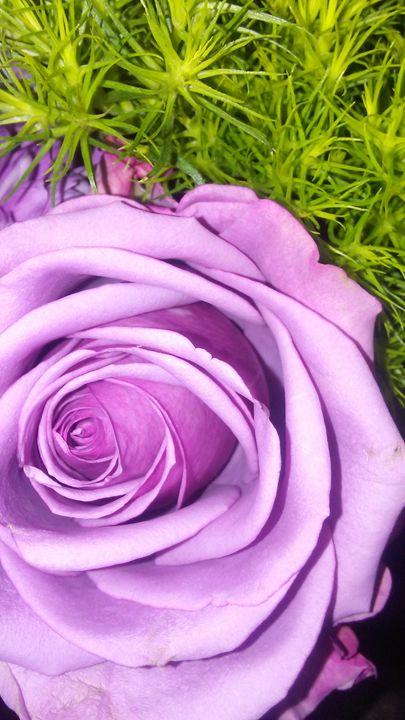 Pretty in Purple - Angel