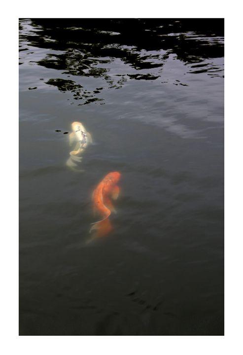 Koi Pair Japanese - G Photo Fine Art