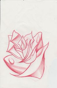 New School Rose Sketch