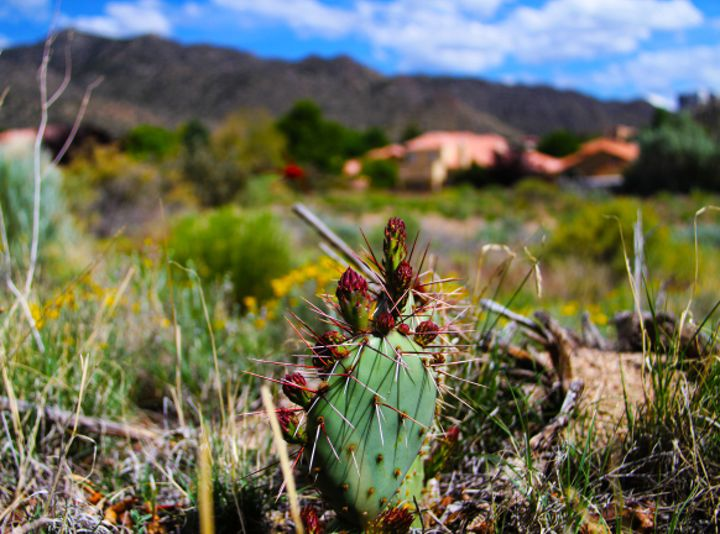 Cactus Blur - Bellwether Photography