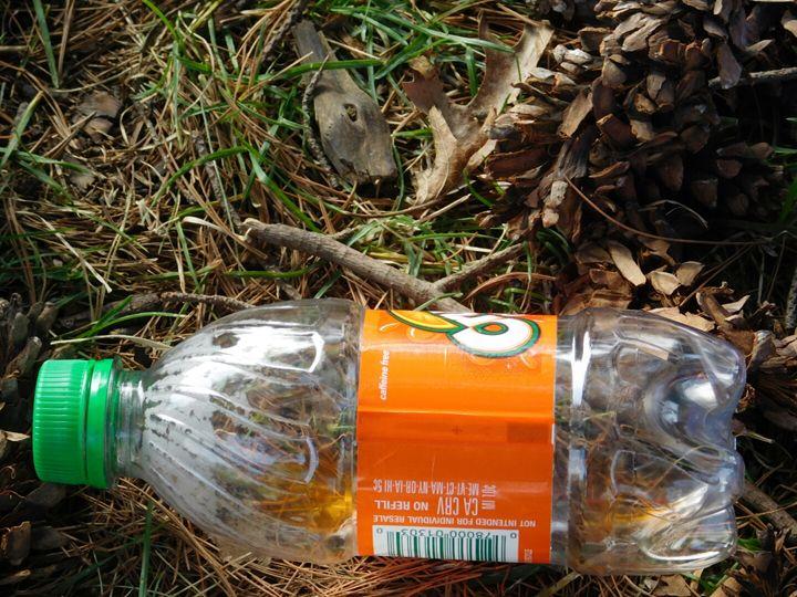 Litter - Wendy LaJean